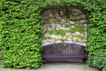 Still life with a wooden bench and a wall of ivy