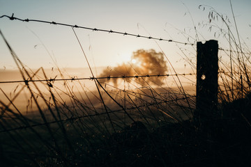 Barbed wire fence dividing land. Beautiful dawn light.