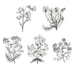 vector illustration sketch of field crops on a white background