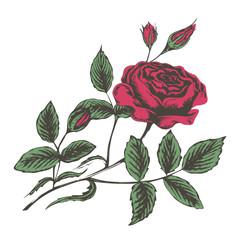 sketch vector illustration of red roses
