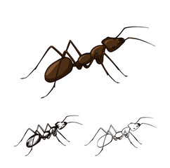 illustration set of ants on a white background