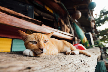 A red sleepy cat lounges on a bench in a bar near the beach