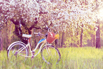 spring pastime weekend/ Stop for a picnic under the blossoming apple tree at sunset