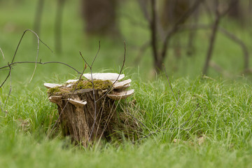 Trunk in the middle of grass forest