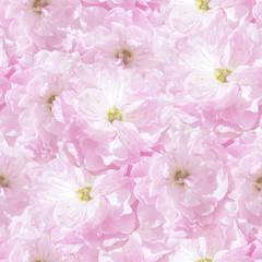 seamless  pattern pink sakura plum flowers