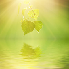 Sunny young green spring leaves of birch tree, natural eco seasonal background with copy space and water reflection