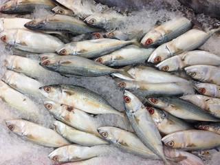 Many mackerel in the market