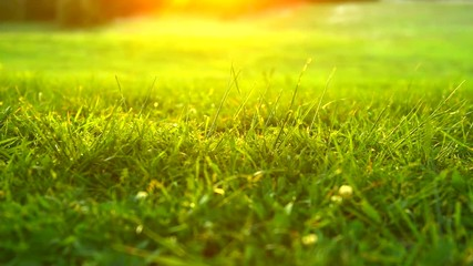 Fotoväggar - Nature grass background. Green grass in spring park with sun flares backdrop. 4K UHD video 3840X2160