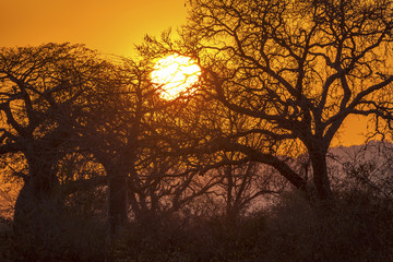 Typical african sunset Tanzania Africa
