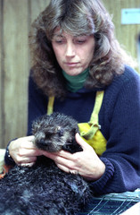 Terry Williams holds the head of a 5 month old femals sea otter at the Sea Otter Rescue Center