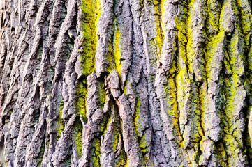 Tree bark texture with detail of moss and lichen on wooden fence