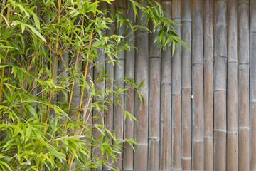 Lush green bamboo screen