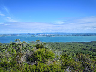 Volcanic nature in Rangitoto Island, New Zealand