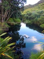 Idyllic nature of Northland, New Zealand - Stock Image