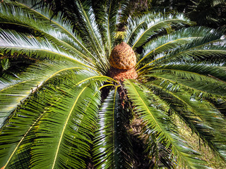Palm Tree, New Zealand - Stock Image