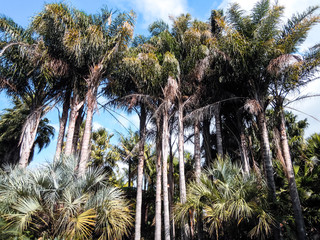 Palm Trees, New Zealand - Stock Image