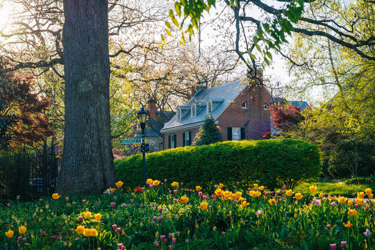 Colorful flowers and house in Guilford, Baltimore, Maryland.