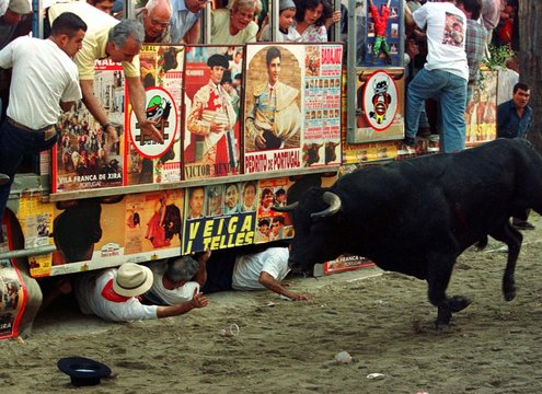 Young people hide under a vintage bus covered with bullfighting posters as a released bull charges p..