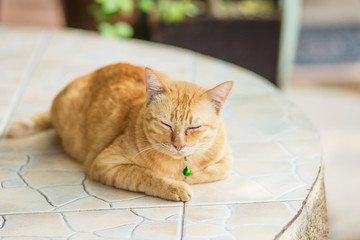 Cute striped red a ginger purebred lying sleeping on the stone table