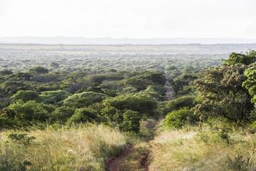 Zululand bushveld