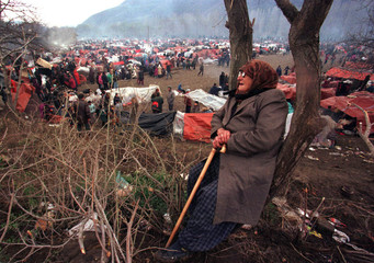 An old Kosovo refugee rests against a tree in a field where more than 25,000 ethnic Albanians are ca..