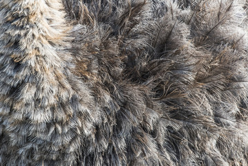 Ostrich feather detail