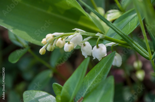 Muguet Porte Bonheur En Foret Stock Photo And Royalty Free Images