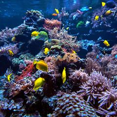 underwater background. Underwater scene. Underwater world. Underwater life landscape