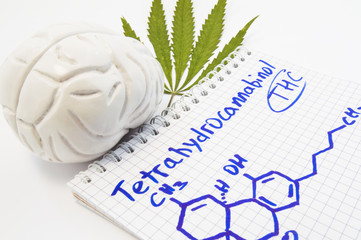 Effects and action of tetrahydrocannabinol (THC) on human brain. Anatomical model of brain is near leaf of hemp and notepad inscribed with title tetrahydrocannabinol and drawn it chemical formula