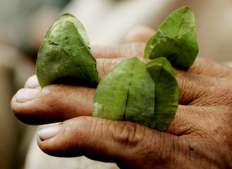 A Peruvian farmer holds coca leaves during a ceremony where President of the Cuzco Region [Oscar Cua..