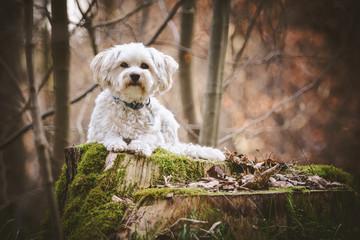 Hund liegt auf Baumstamm