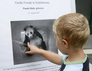 A boy points onto a poster with a still image from  a surveillance camera showing giant panda Yang Yang holding her newly born cub in her mouth in the zoo in Vienna