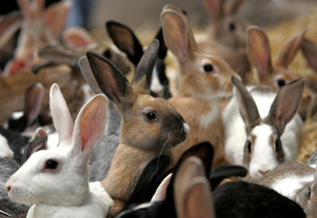 Rabbits look at passers-by as they are put on a sale at a market in Alexandria