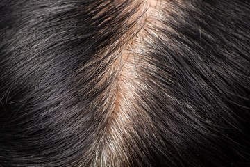 Close-up of the hair that starts to gray hair.