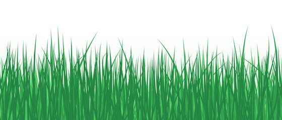 Vector realistic detailed illustration grass seamless pattern isolated on white background