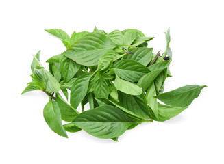 Leaf Sweet Basil on white background