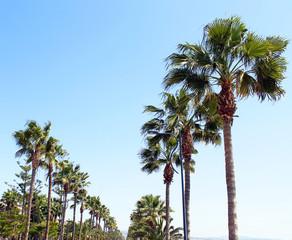 Palmen an Promenade
