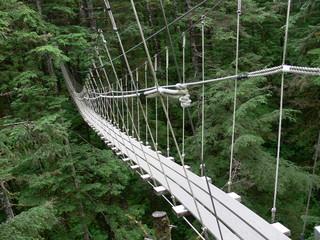 Rope suspension bridge in forest