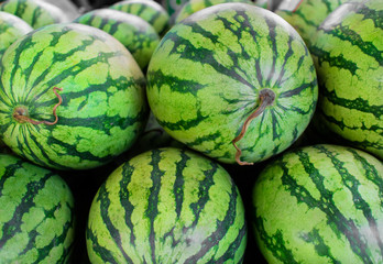 Background of many big sweet green watermelons