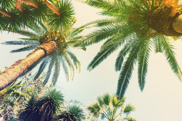 tropical palm trees   on sky background, retro toned