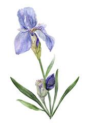 Watercolor iris pattern
