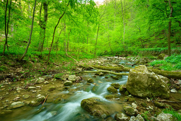 Stream on the forest
