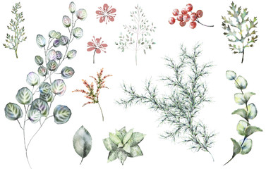 Set plants elements - herbs, leaf, berry. collection garden and wild herb, leaves, branches, illustration isolated on white background, eucalyptus, exotic. watercolor style.