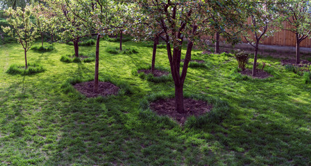 Green grass clipped under the trees in the garden