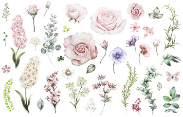Set elements of rose, hyacinth. Collection garden and wild flowers, branches, illustration isolated on white background, eucalyptus, bud, exotic leaf, herbs. Watercolor style