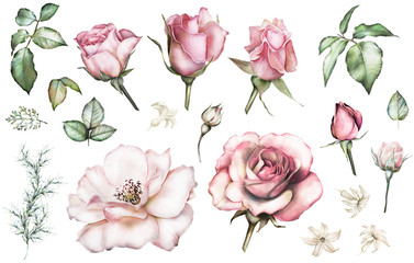 Set elements of rose. Collection garden and wild flowers, branches, illustration isolated on white background, bud, leaf, herbs. Watercolor style