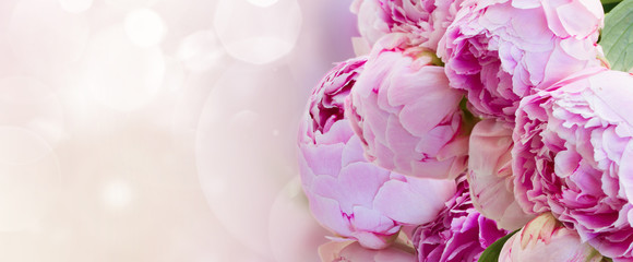 bunch of pink peony flowers on fancy bokeh background banner