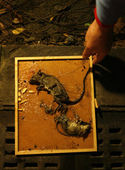 An exterminator poses as he holds a trap with dead rats outside a shopping centre in Taiwan
