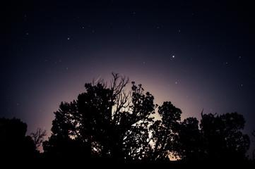 Moonrise Juniper Tree Silhouette on Night Sky