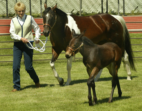 IDAHO GEM THE FIRST CLONED MULE IS DISPLAYED AT UNIVERSITY OF IDAHO.